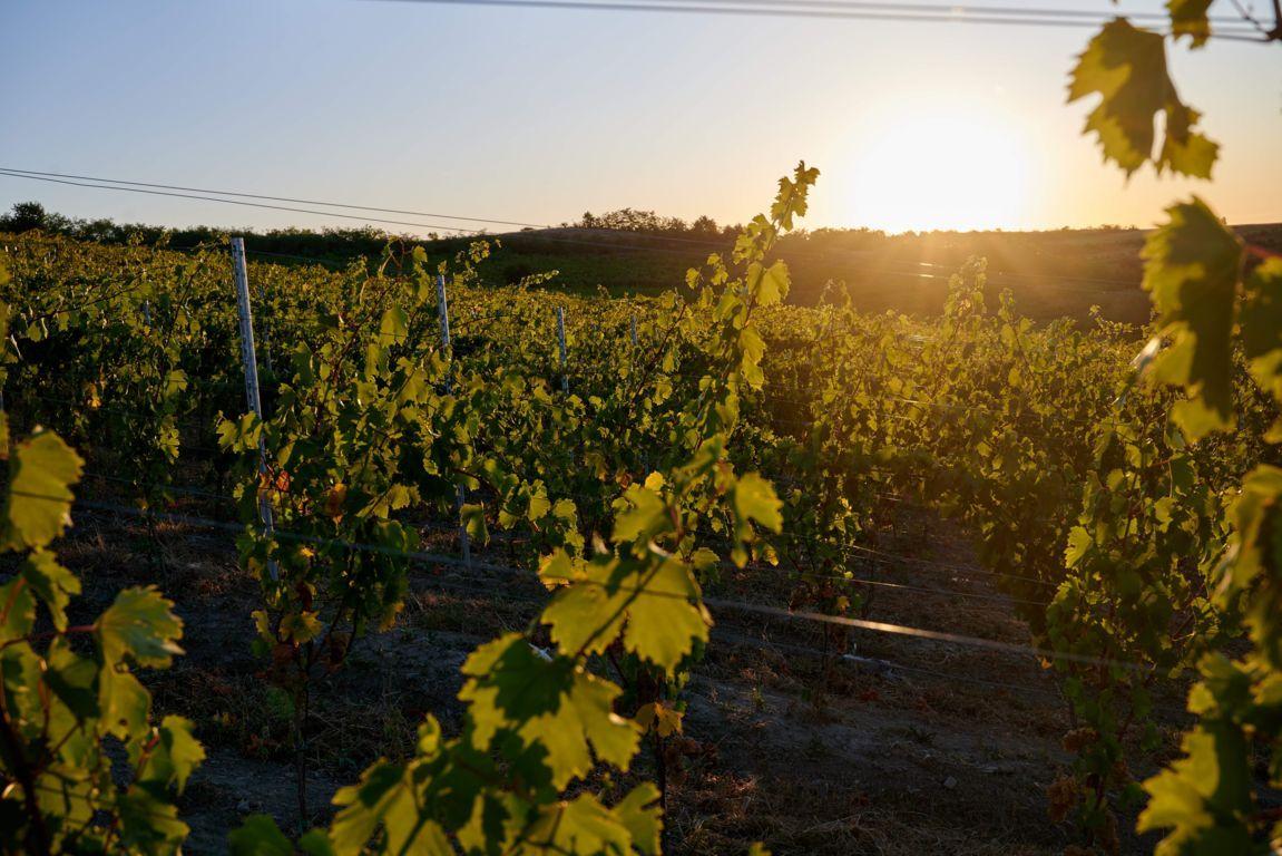 poza argicultura vin